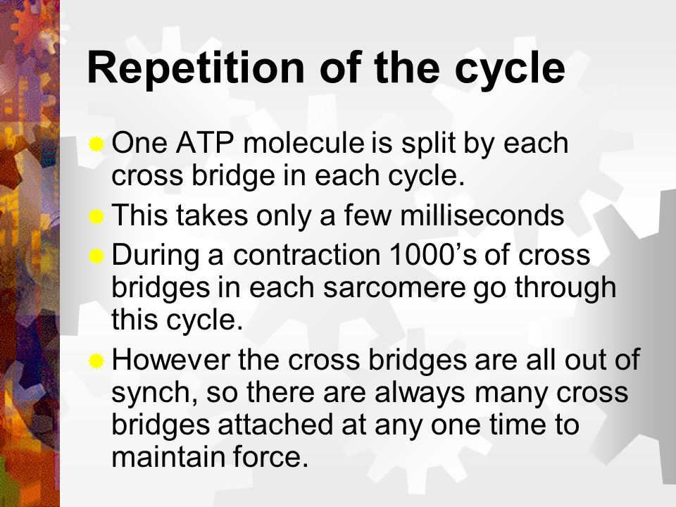 Repetition of the cycle