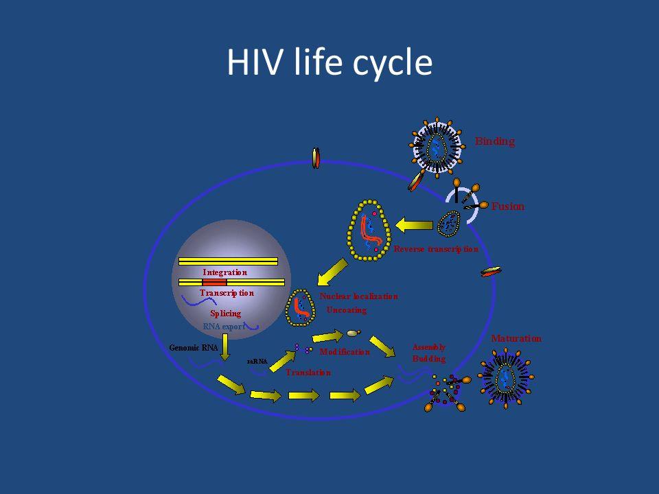 HIV life cycle