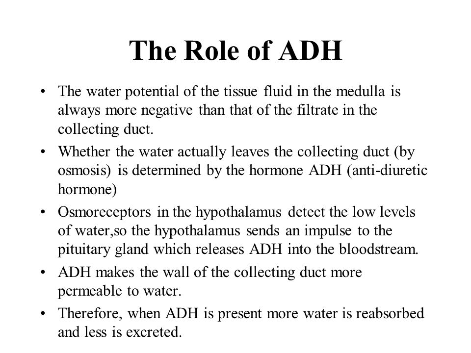 The Role of ADH The water potential of the tissue fluid in the medulla is always more negative than that of the filtrate in the collecting duct.