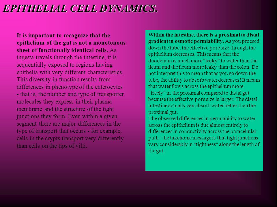 EPITHELIAL CELL DYNAMICS.