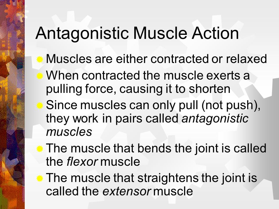 Antagonistic Muscle Action