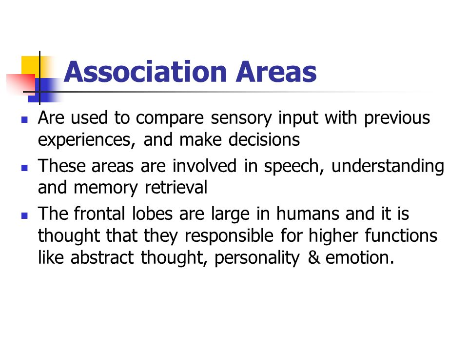 Association Areas Are used to compare sensory input with previous experiences, and make decisions.