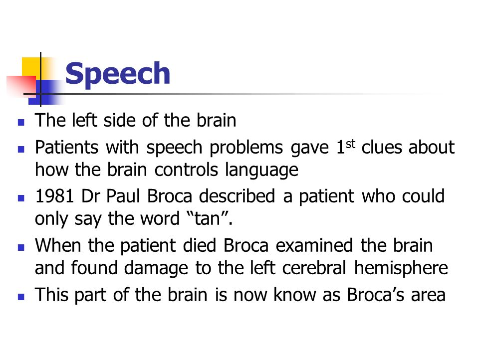 Speech The left side of the brain