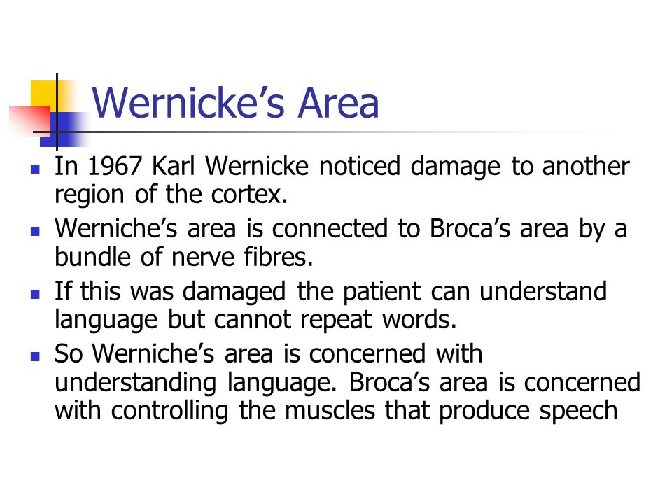Wernicke's Area In 1967 Karl Wernicke noticed damage to another region of the cortex.