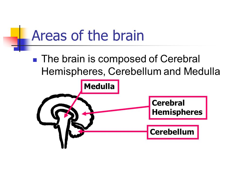 Areas of the brain The brain is composed of Cerebral Hemispheres, Cerebellum and Medulla. Medulla.