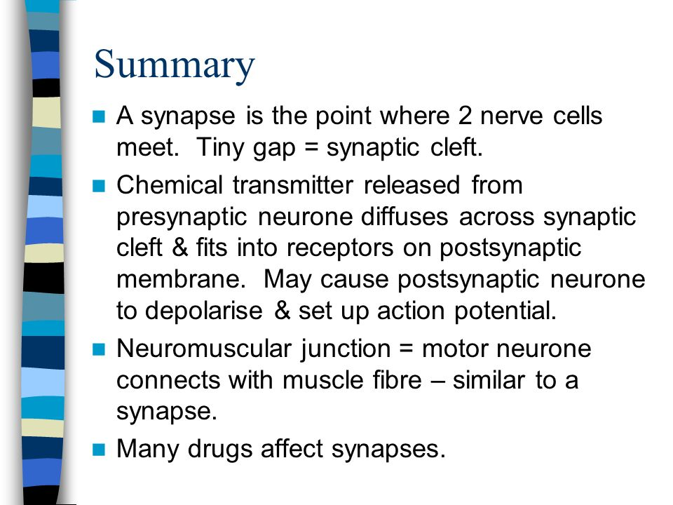 Summary A synapse is the point where 2 nerve cells meet. Tiny gap = synaptic cleft.