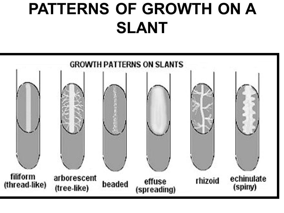 cultural characteristics of microorganisms pdf