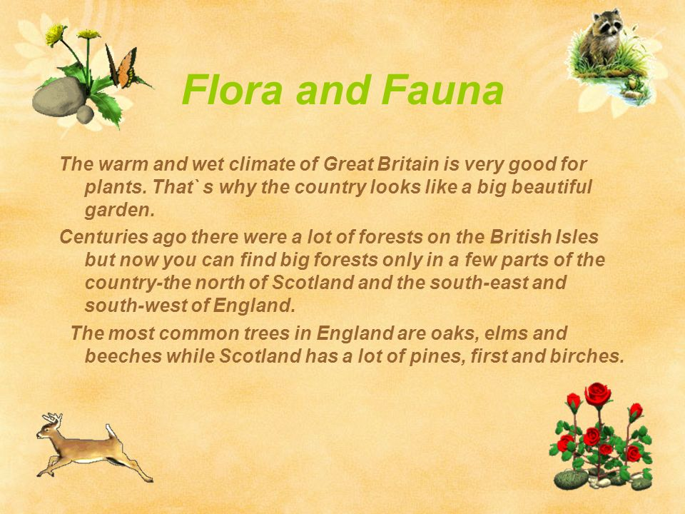 Flora and fauna for collection 15 wallpapers for Floar meaning