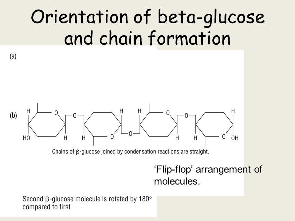 Starch Glycogen And Cellulose Ppt Video Online Download