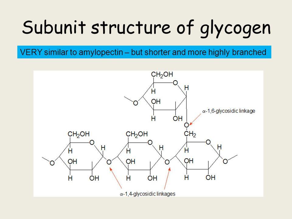 diagram of glycogen - 28 images - glycogen structure ...