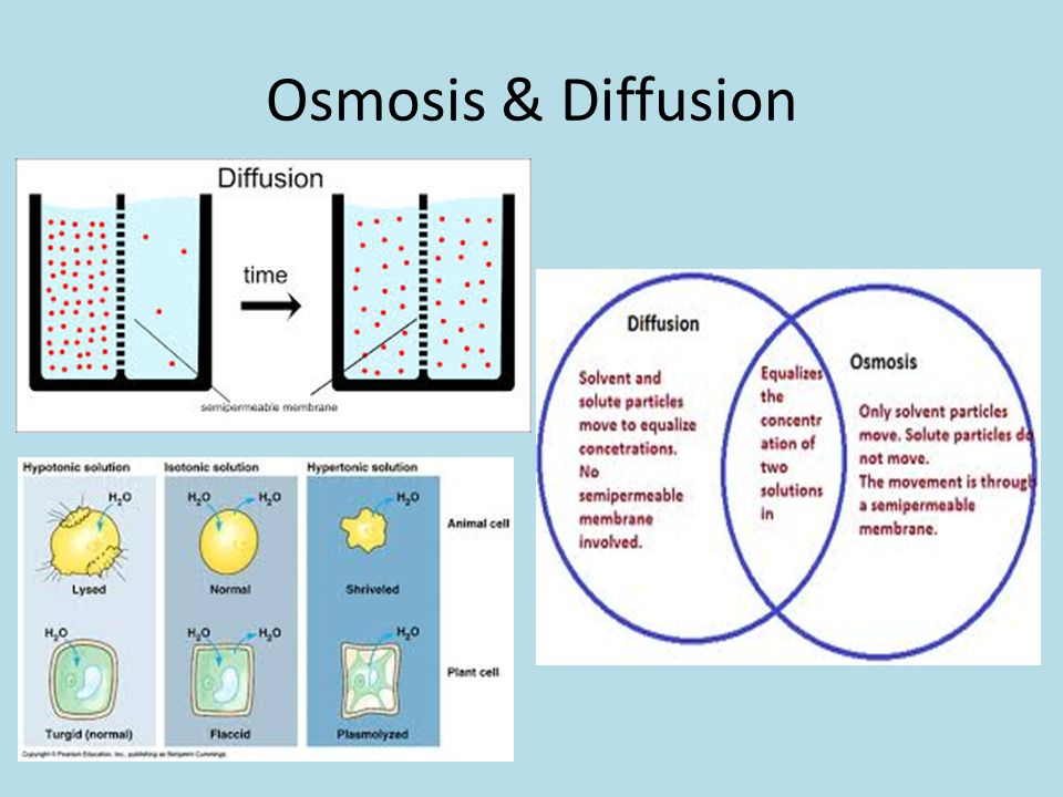 an introduction to an analysis of osmosis a diffusion of water Lab report: diffusion and osmosis  analysis: part a: diffusion and osmosis  in which it is the diffusion of water through a selectively permeable membrane and .