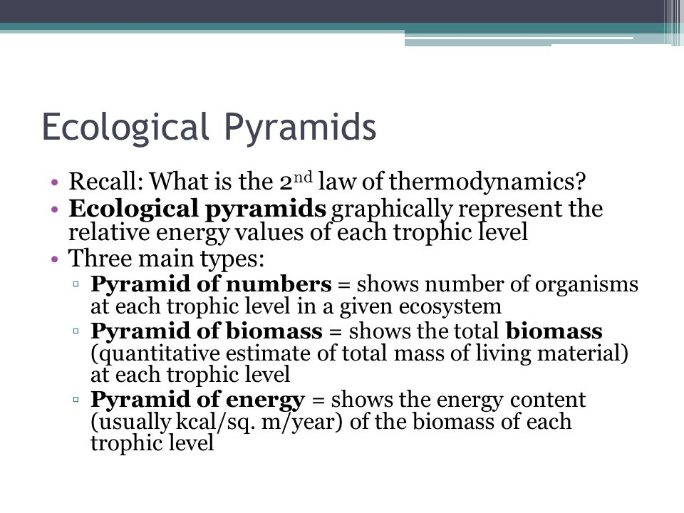 3 types of ecological pyramids pdf