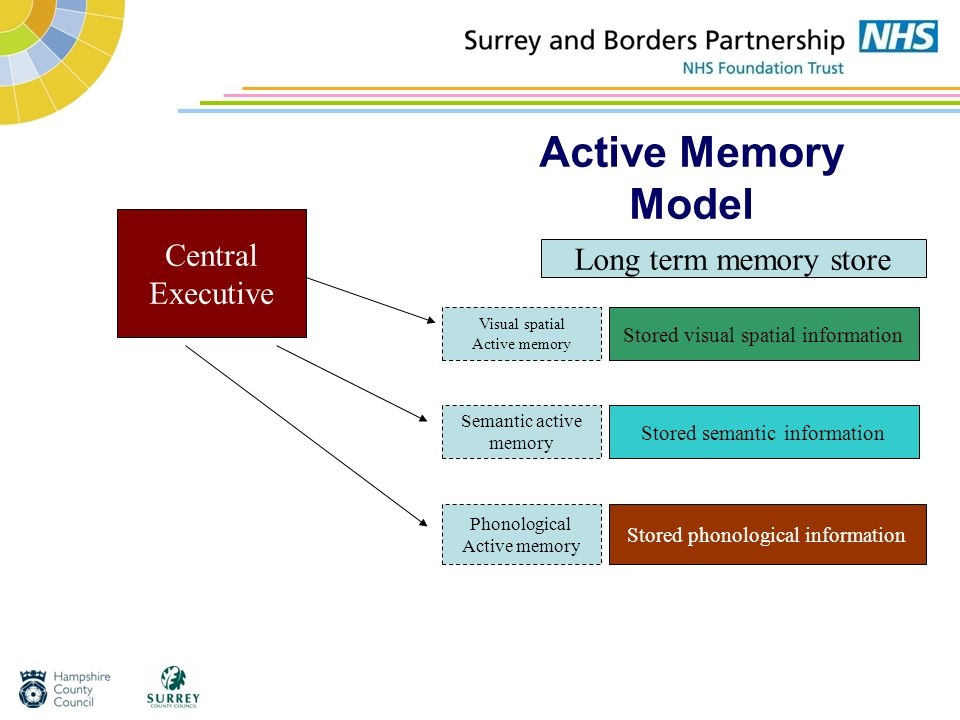 Active Memory Model Central Executive Long term memory store
