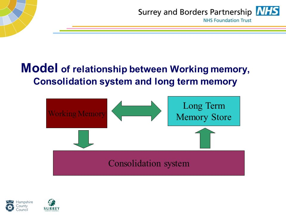 Model of relationship between Working memory, Consolidation system and long term memory
