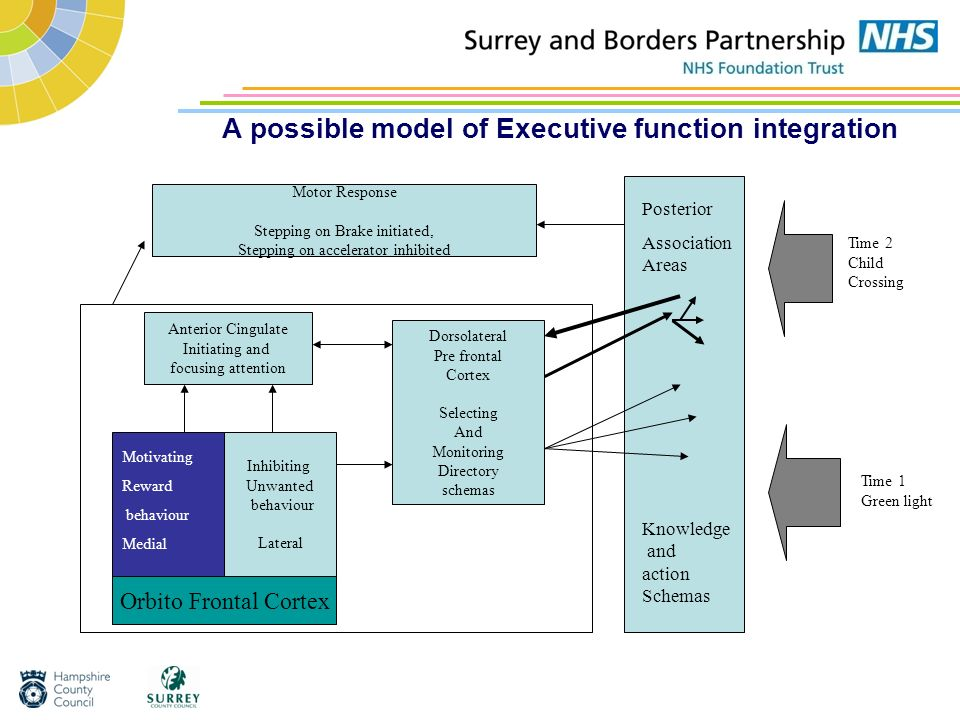 A possible model of Executive function integration