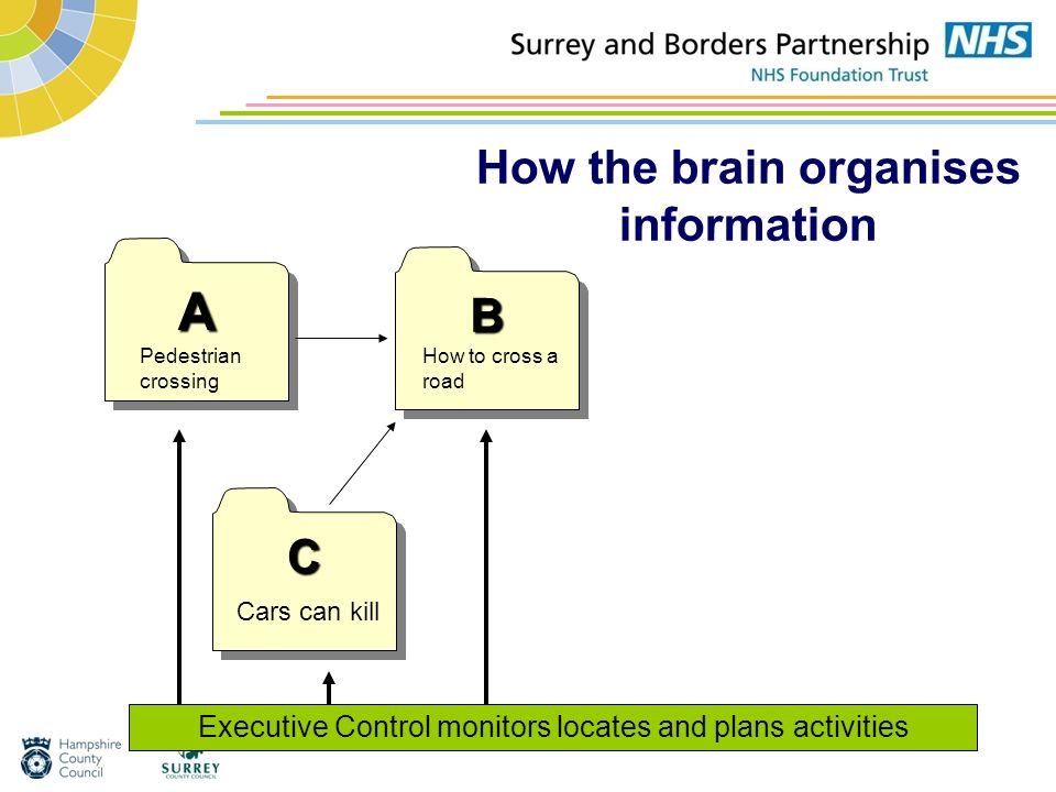 How the brain organises information