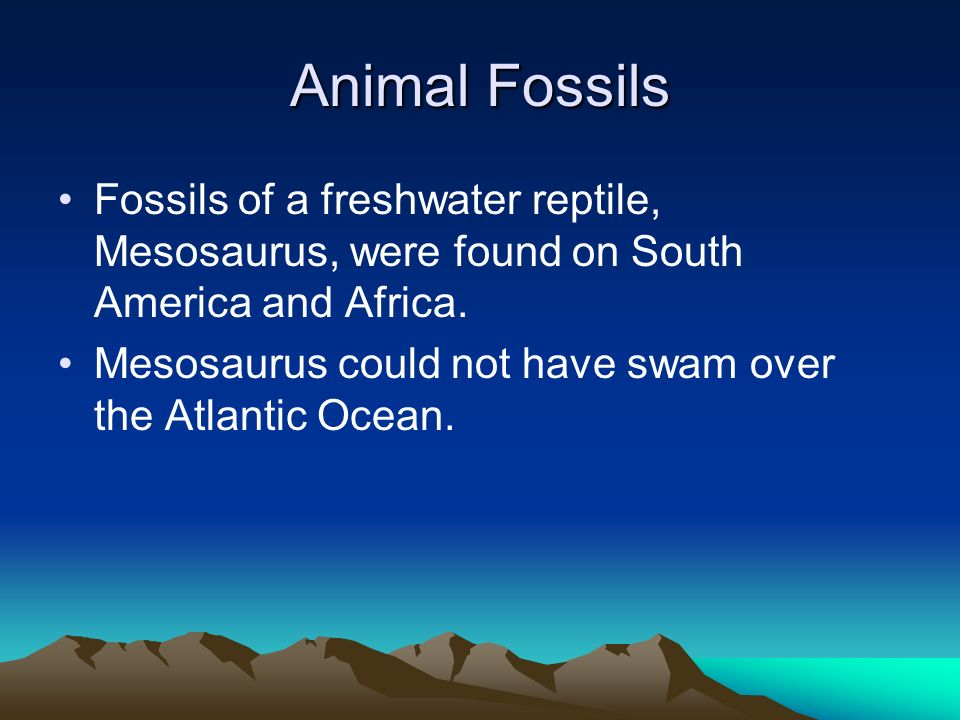 Animal Fossils Fossils of a freshwater reptile, Mesosaurus, were found on South America and Africa.