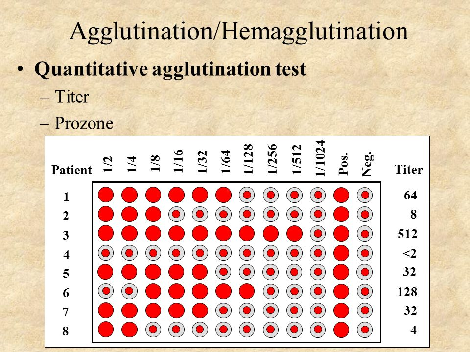 agglutination tests lattice formation ppt video online