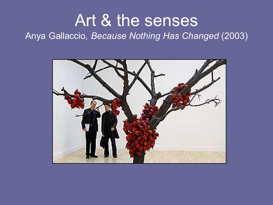 Art & the senses Anya Gallaccio, Because Nothing Has Changed (2003)