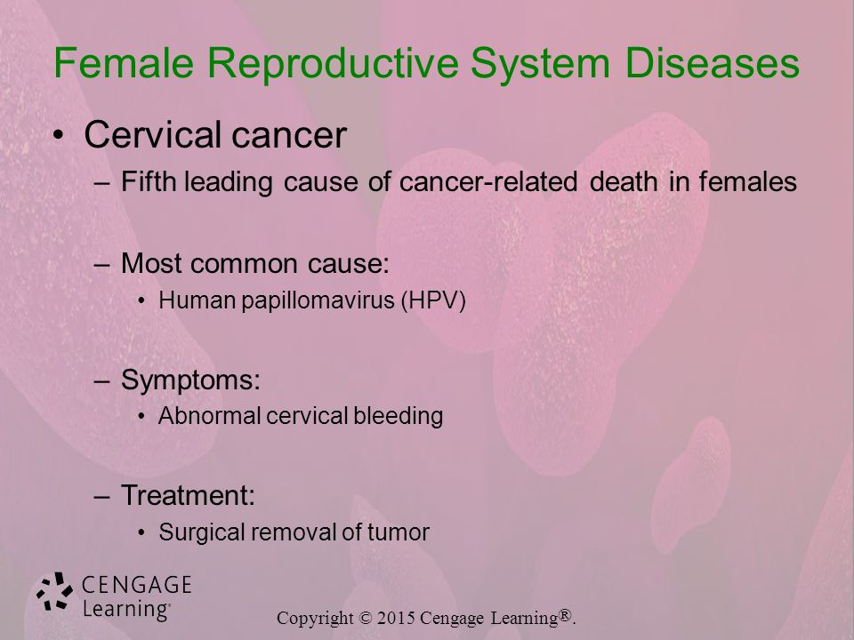 reproductive system diseases and disorders - ppt download, Muscles