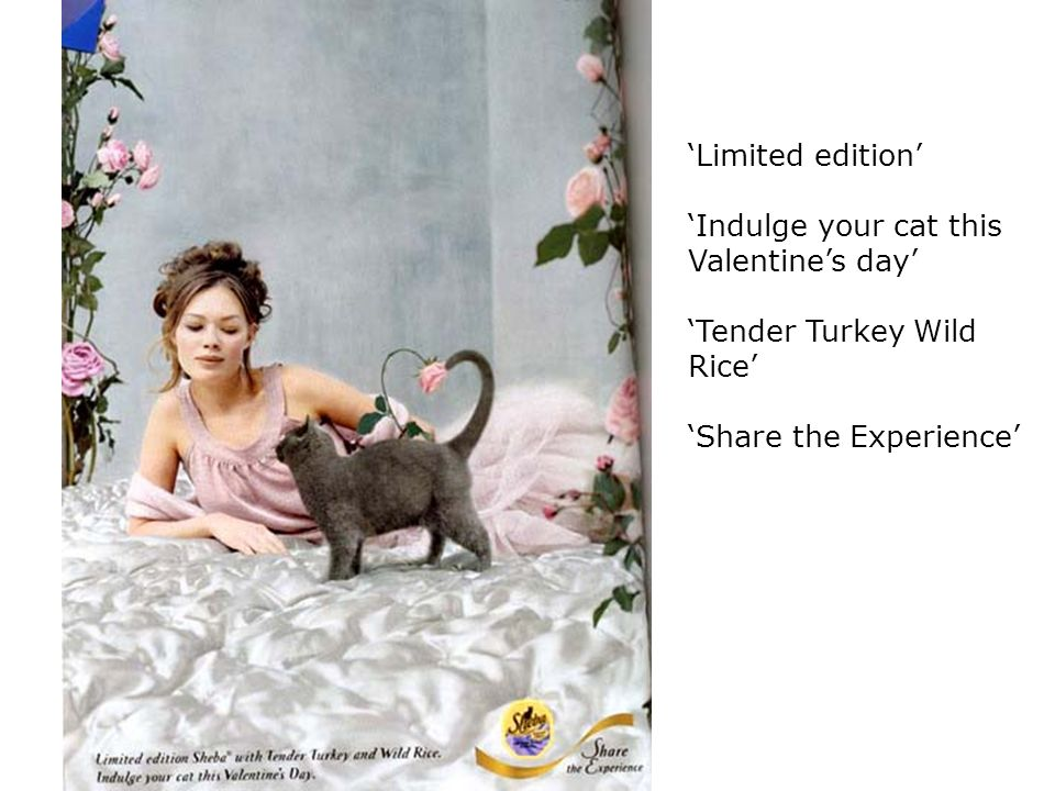 'Indulge your cat this Valentine's day'