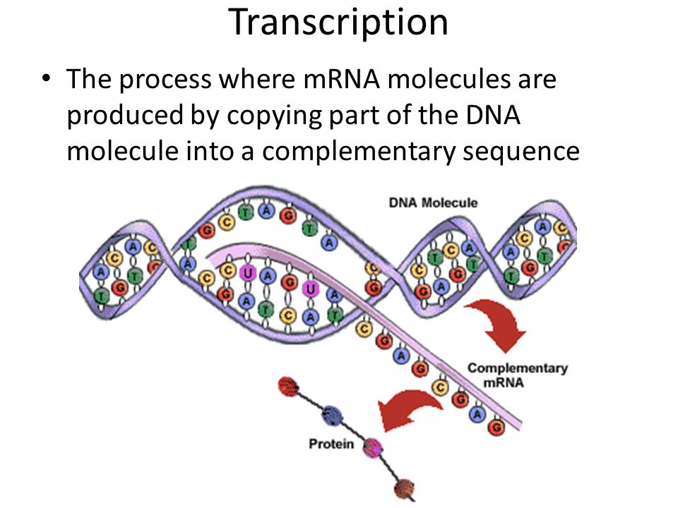 WARM-UP: What does DNA stand for. What is the purpose of ...