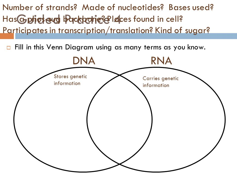 Difference Between Dna And Rna Venn Diagram Yeniscale