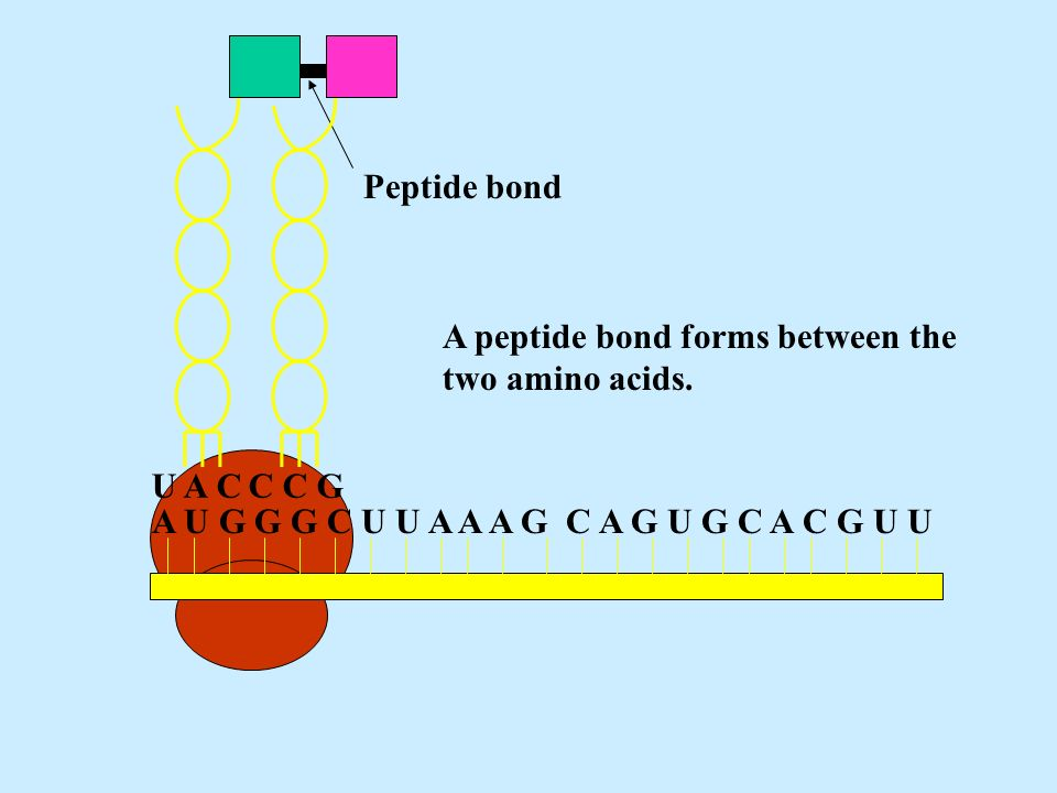 The Structure of DNA All life on earth uses a chemical called DNA ...