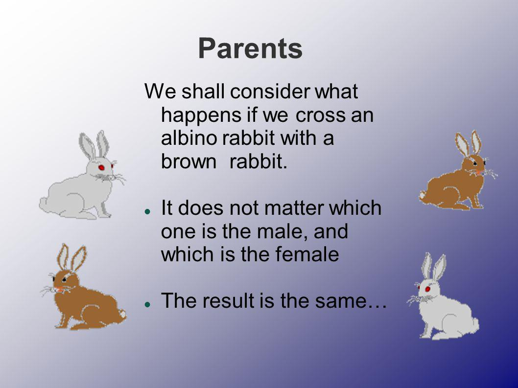 Parents We shall consider what happens if we cross an albino rabbit with a brown rabbit.