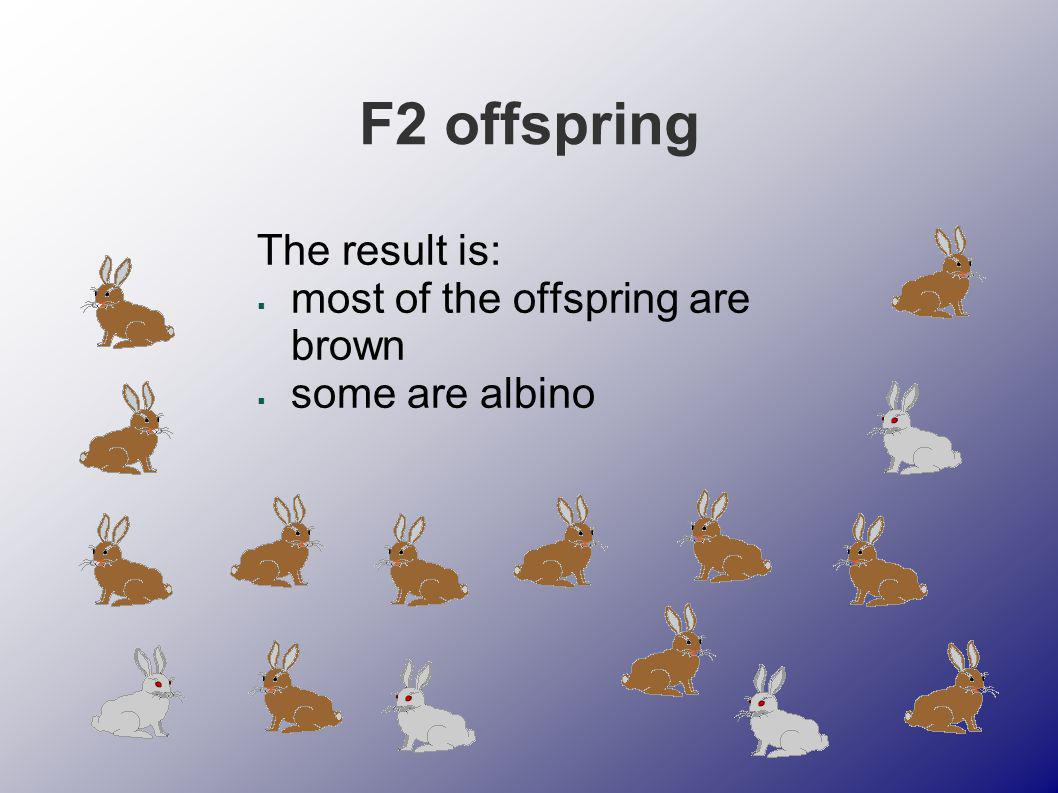 F2 offspring The result is: most of the offspring are brown