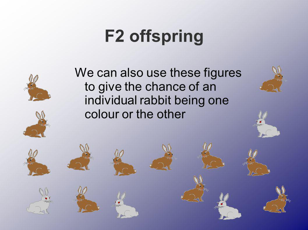F2 offspring We can also use these figures to give the chance of an individual rabbit being one colour or the other.