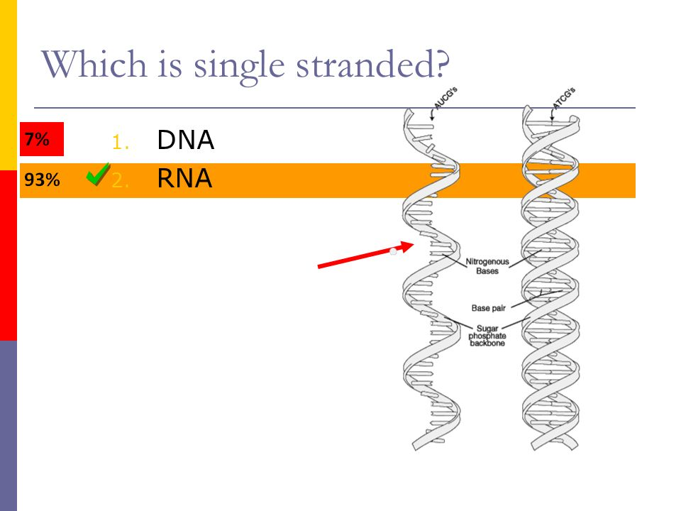 Part ii genetic code and translation ppt video online download 2 which sciox Image collections