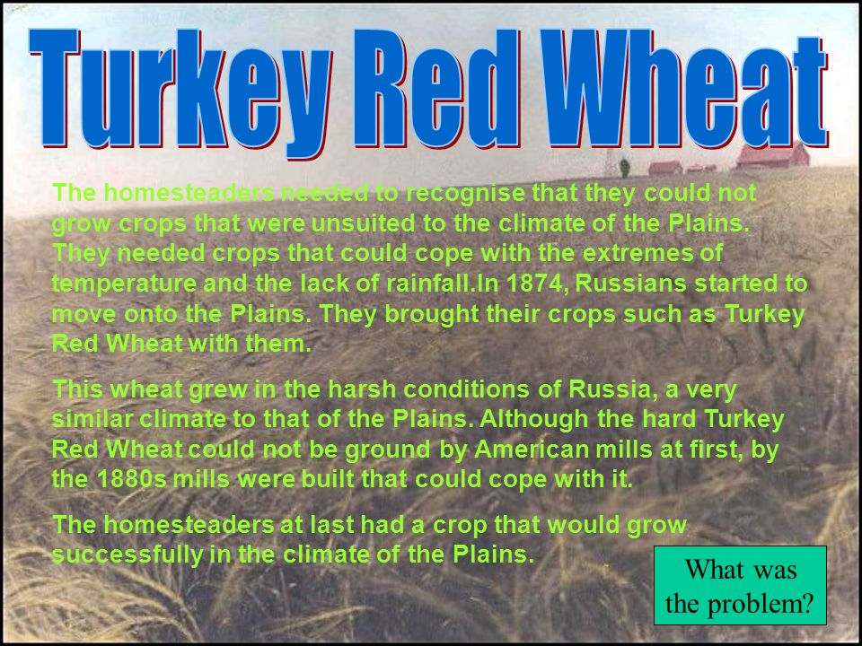 Turkey Red Wheat What was the problem