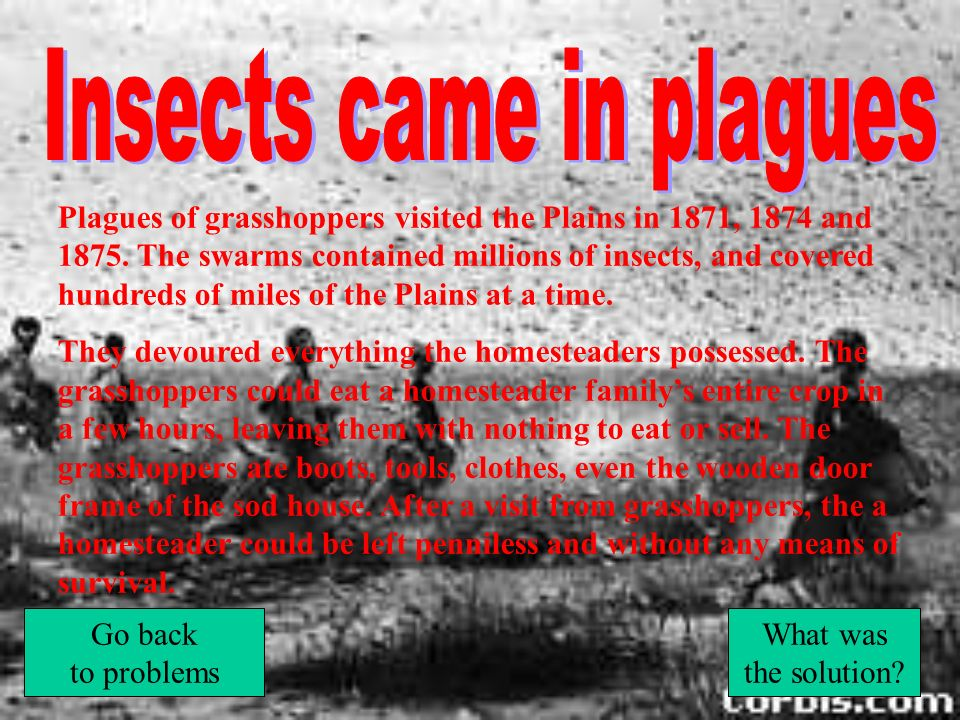 Insects came in plagues