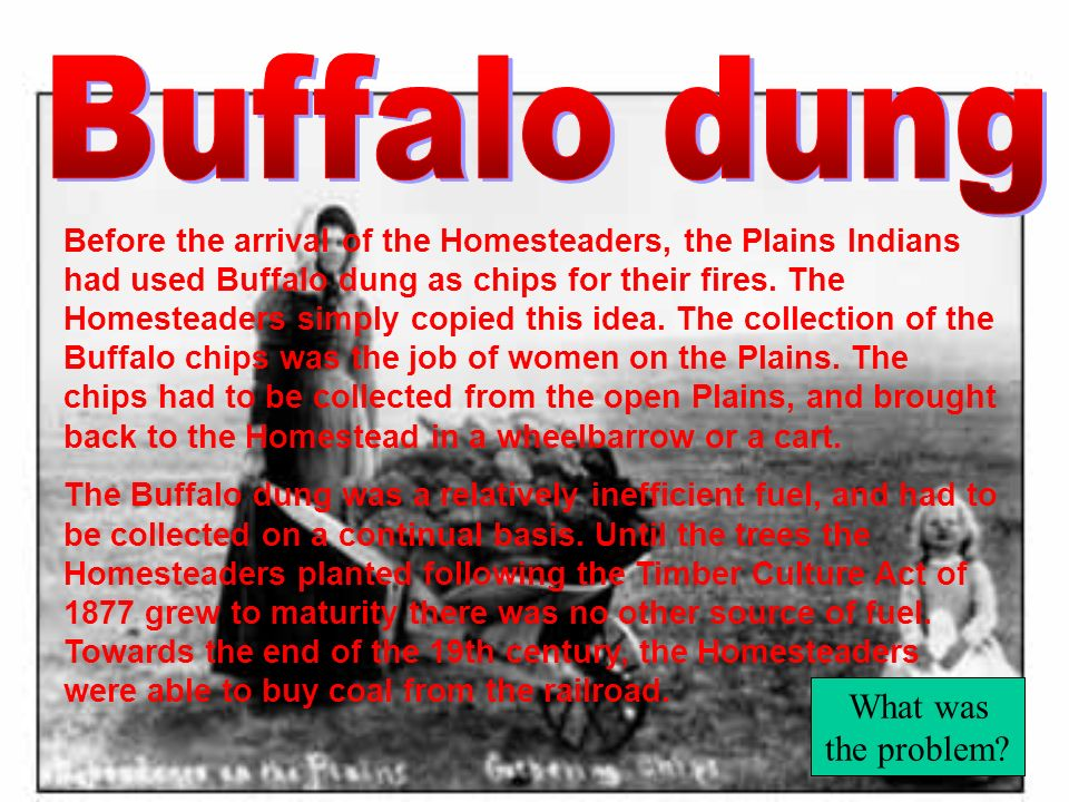 Buffalo dung What was the problem