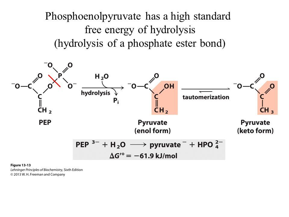 The hydrolysis of nitrophenyl phosphate Coursework Sample