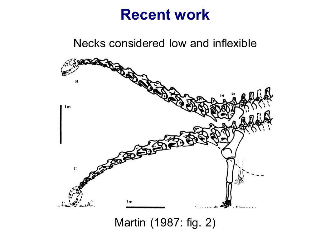 Necks considered low and inflexible