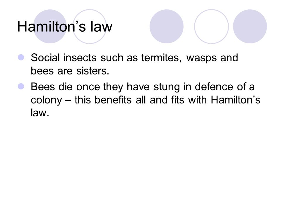 Hamilton's law Social insects such as termites, wasps and bees are sisters.
