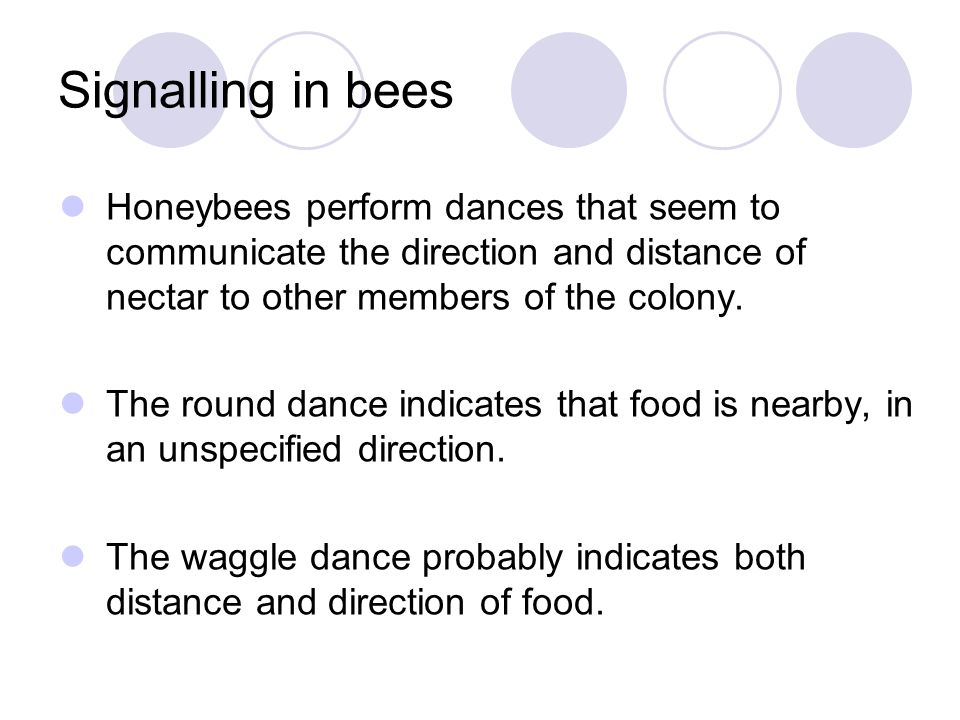 Signalling in bees Honeybees perform dances that seem to communicate the direction and distance of nectar to other members of the colony.