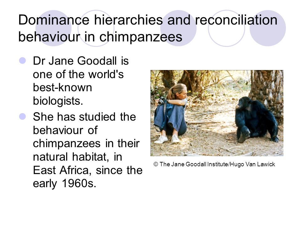 Dominance hierarchies and reconciliation behaviour in chimpanzees