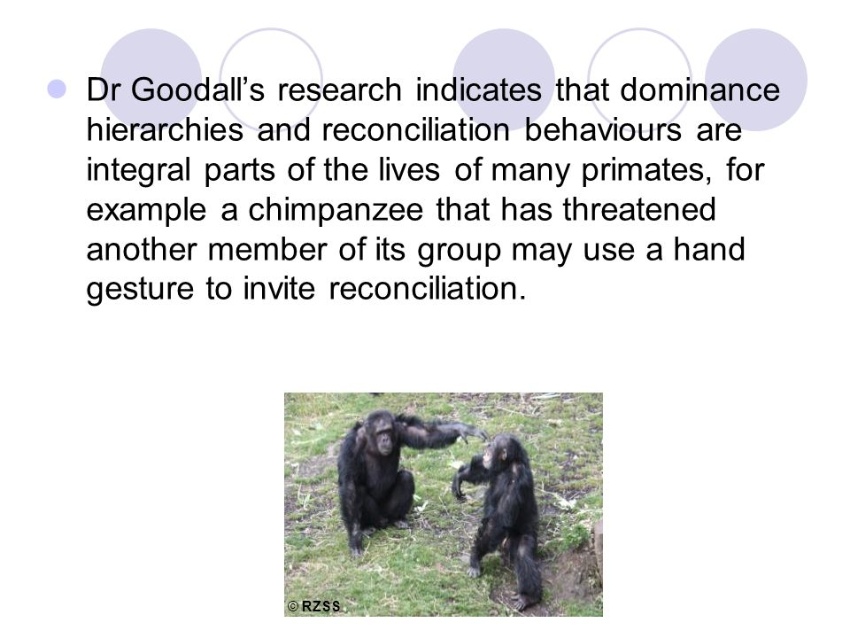 Dr Goodall's research indicates that dominance hierarchies and reconciliation behaviours are integral parts of the lives of many primates, for example a chimpanzee that has threatened another member of its group may use a hand gesture to invite reconciliation.