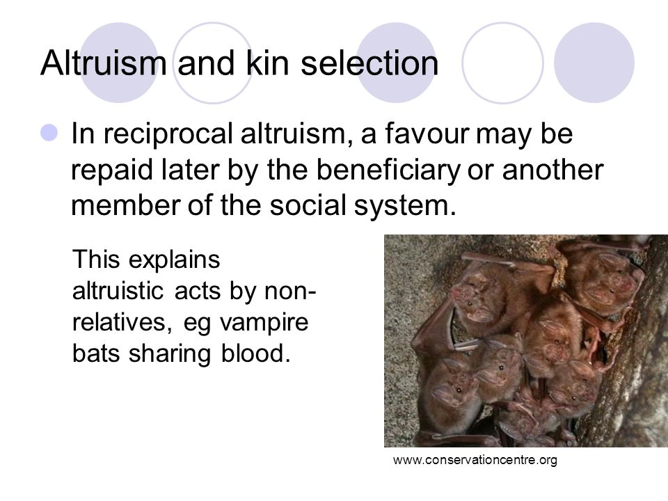 Altruism and kin selection