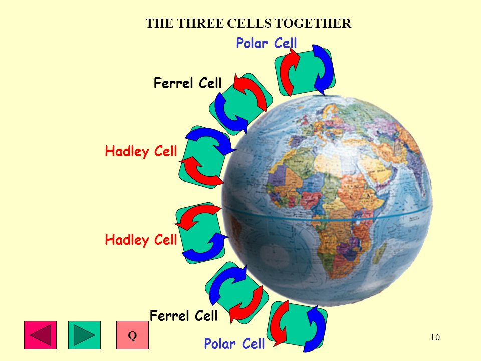 THE THREE CELLS TOGETHER