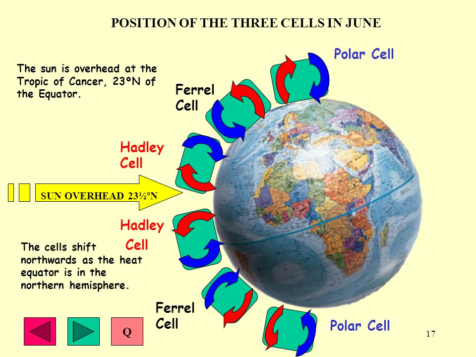 POSITION OF THE THREE CELLS IN JUNE