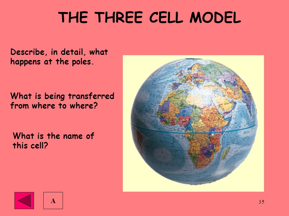 THE THREE CELL MODEL Describe, in detail, what happens at the poles.