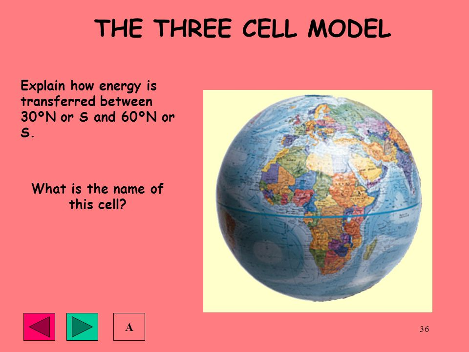 What is the name of this cell