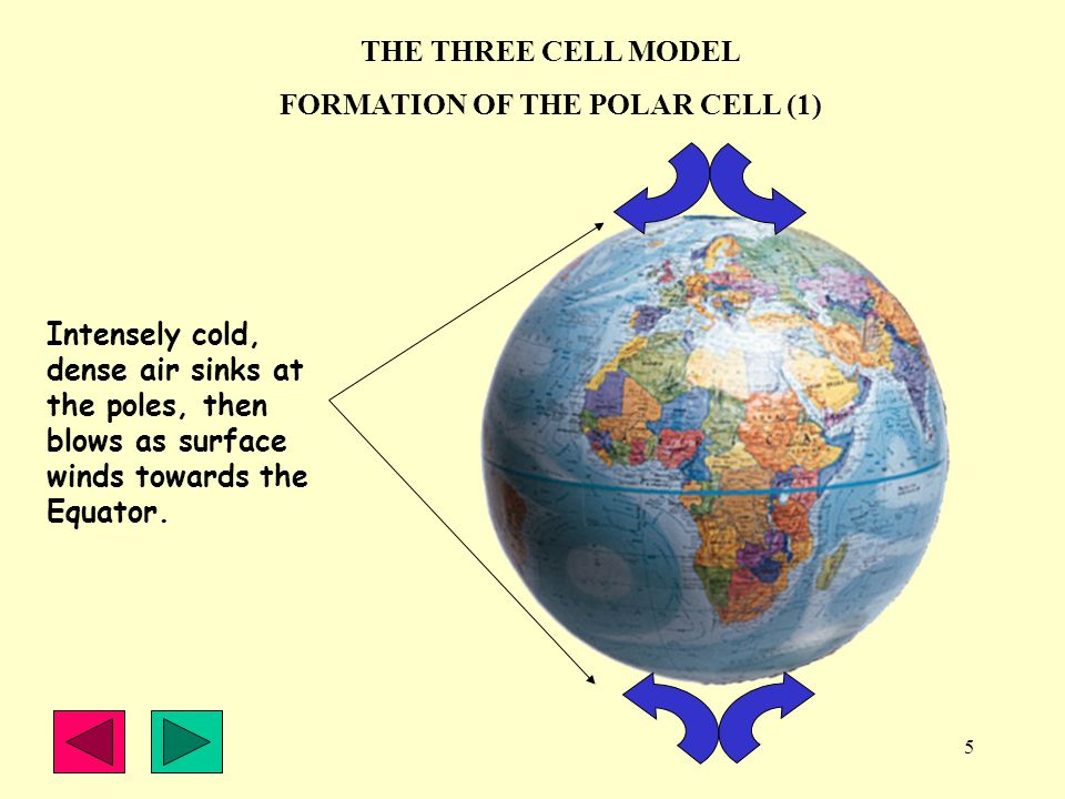 FORMATION OF THE POLAR CELL (1)