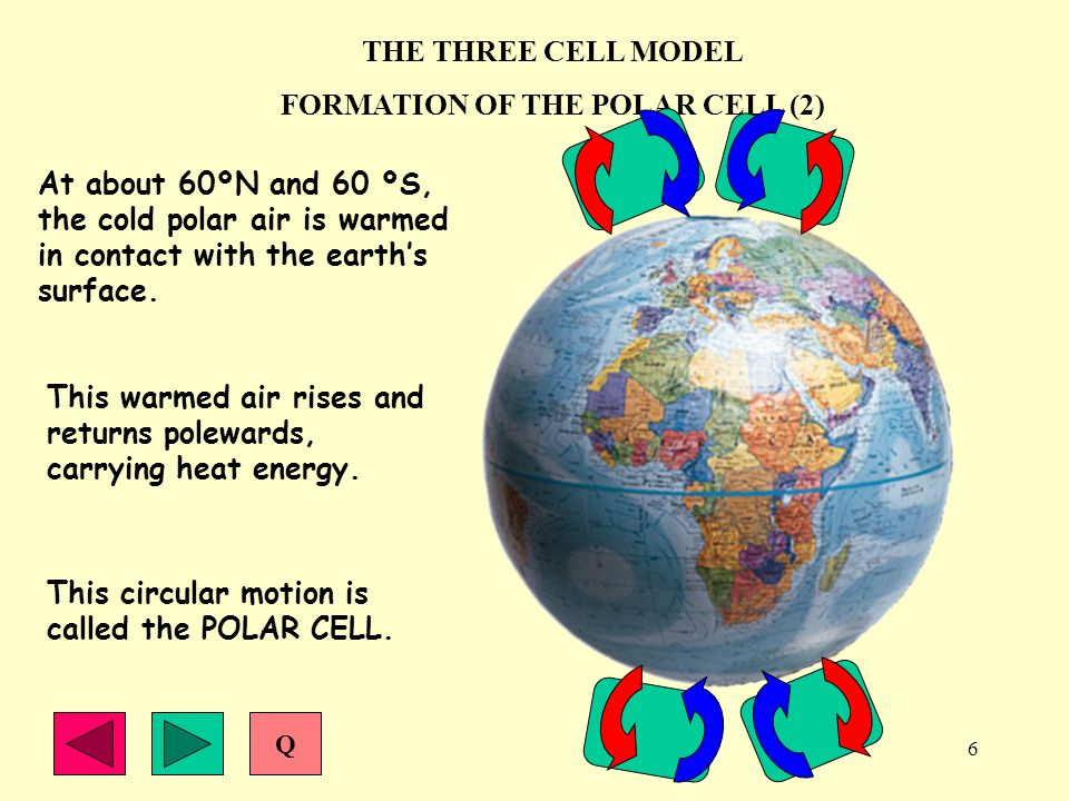 FORMATION OF THE POLAR CELL (2)