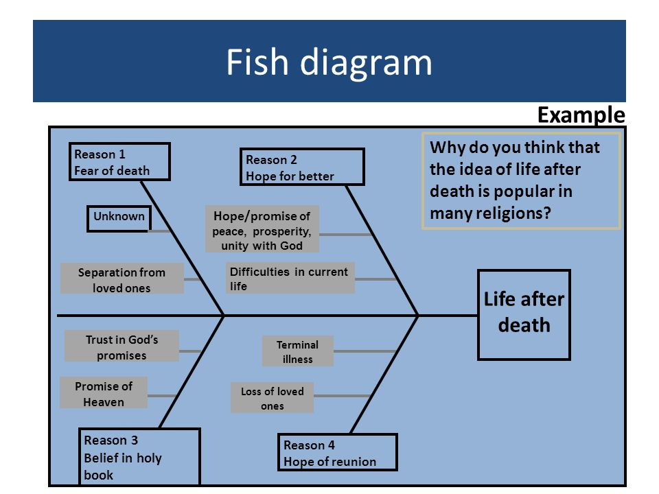Fish diagram Example Life after death