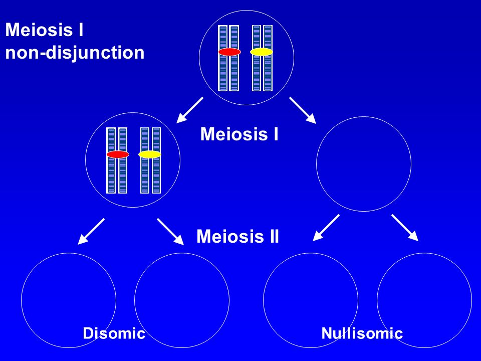 Meiosis I non-disjunction Meiosis I Meiosis II Disomic Nullisomic